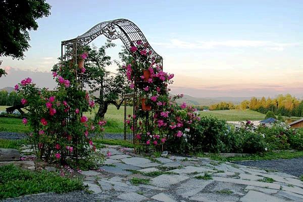 Rose Des Champs Jardin Québec