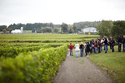 route des vins brome