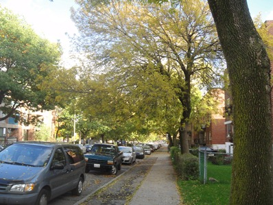 rue theodore